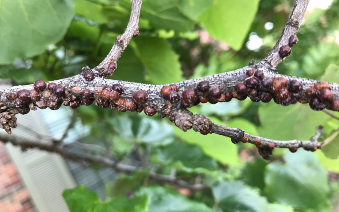 Common Pests That Plague Your Trees in the Winter