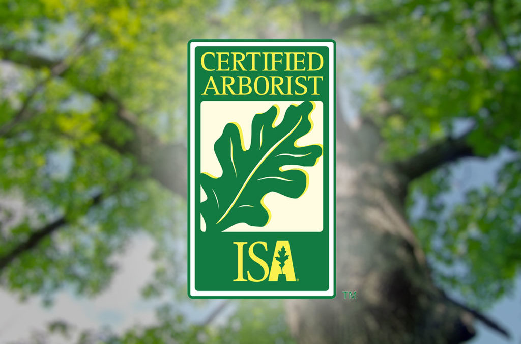 When Should I Call an ISA Certified Arborist?