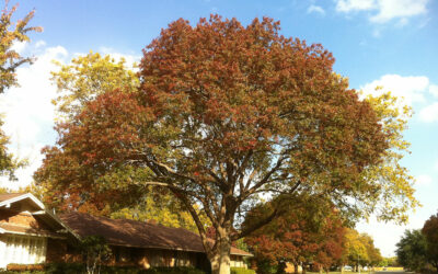 The Top Fall Maintenance Tips for Your Trees