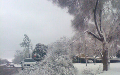 Winter Injury May Be Apparent In Trees This Spring