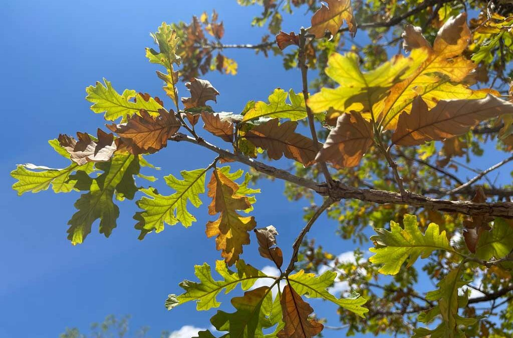 Common Issues That May Impact Your Trees This Summer
